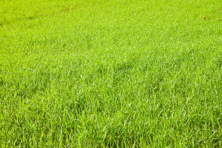 Green wild grass field background