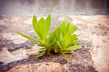 Small plant was born in an improbable place - power of life concept image