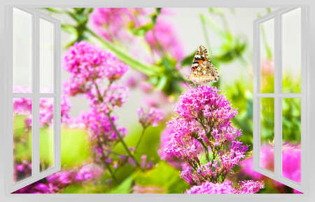 open windows: Machaon gently resting on a pink flower view from the window - spring concept image