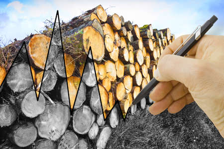 Hand drawing a graph about the timber market - concept image Stock Photo