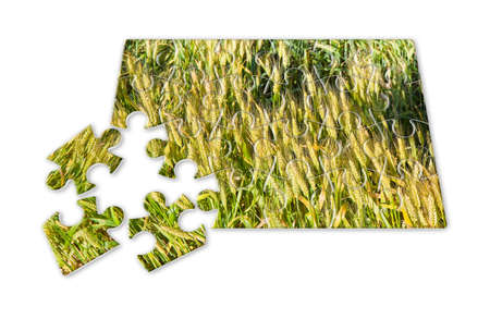 dismantle: Wheat field in puzzle shape - concept image Stock Photo