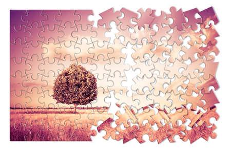 Isolierter Baum in einem Weizenfeld in der Toskana in Form eines Puzzles - (Toskana - Italien - getönten Bild) Standard-Bild