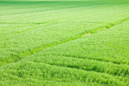 Green grass field backgrounds seen from above - image whit copy space