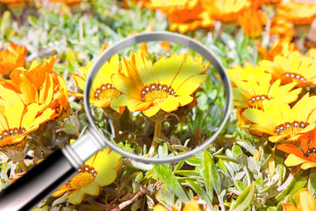 Colored flowers with magnifying glass on foreground - research on flower diseases - concept image