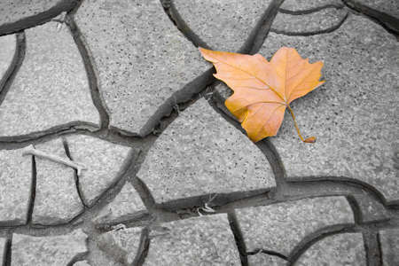 Isolated dry leaf on the ground - concept image