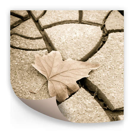 Isolated dry leaf on dry ground - concept image Stock Photo