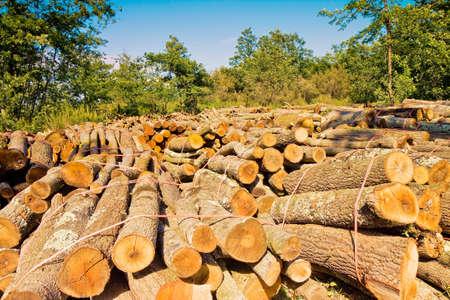 Cut tree logs
