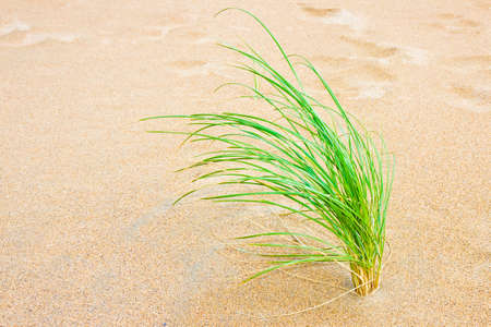 Small plant born on sand - New life concept image