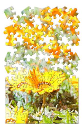 Frühlingskonzept in Puzzleform Standard-Bild