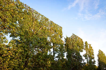 High hedge finely trimmed in a park in Wien (Austria) Stock Photo