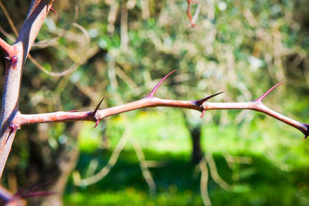 The stem of a plant with thorns