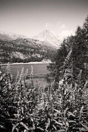 Walking around Sils lake - Upper Engadine Valley - Switzerland - toned image Stock Photo
