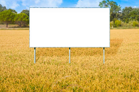 Blank advertising billboard immersed in a rice field - concept image with copy space