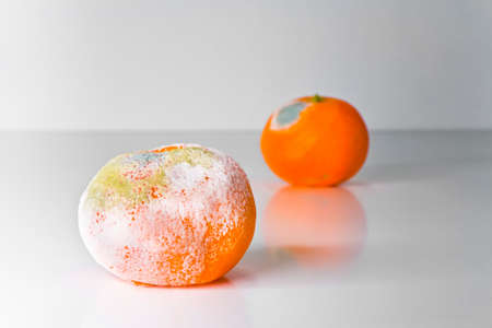 A moldy orange isolated on a white background