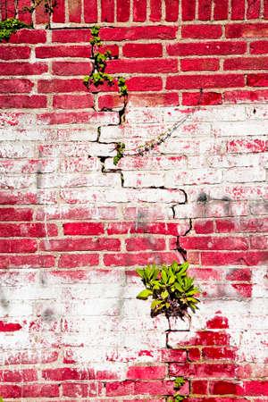 Varnished and cracked brick wall - toned image Reklamní fotografie