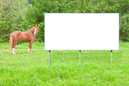Blank commercial advertising billboard immersed in a rural scene with brown horse - image with copy space