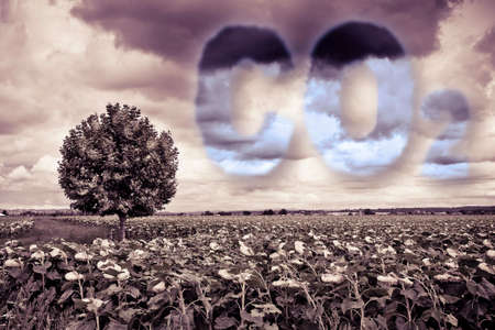 CO2 concept image against a dramatic cloudy sky over a sunflowers field with a lone tree.