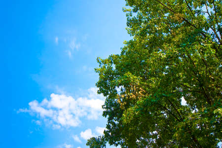 Tree canopy against a sky background - image with copy space. Stock Photo