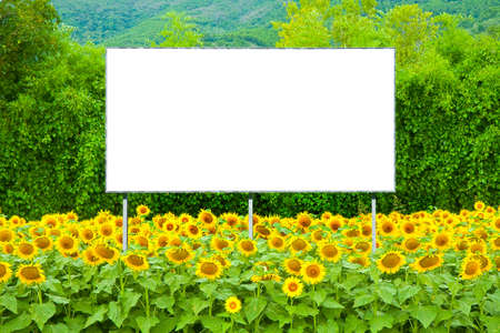 Blank advertising billboard immersed immersed in a field of sunflowers - concept image with copy space