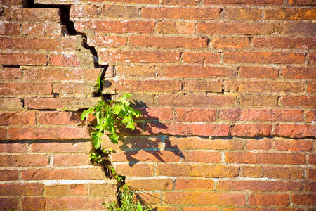 Old brick wall cracked and damaged with a small plant born inside.