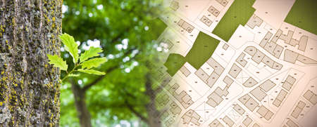 Nature and city - concept image with leaf of a tree in a public park and city map.