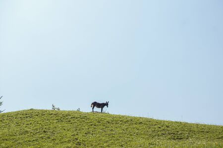 Donkey on top of a mountain Imagens
