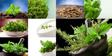 different aromatic herbs arranged into a collage Stock Photo - 9650345