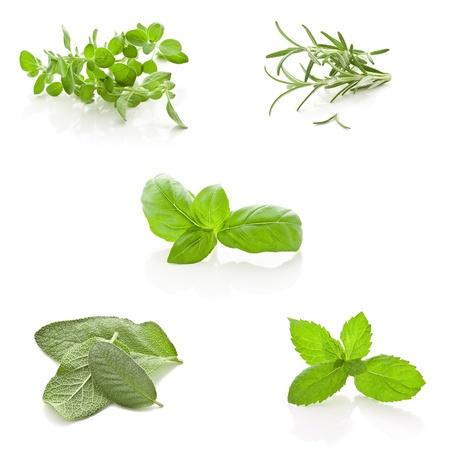 basilic: Photo des herbes fra�ches diff�rentes lanceur ensemble dans un collage Banque d'images