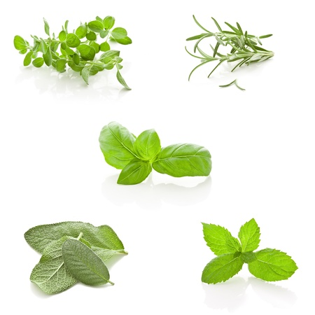 sage: photo of different fresh herbs putted together into a collage
