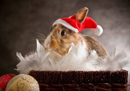 photo of adorable Dwarf rabbit wearing a Santa Claus Costume photo