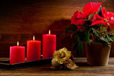 flor de pascua: Foto del plan de poinsettia hermoso en la mesa de madera iluminada por punto