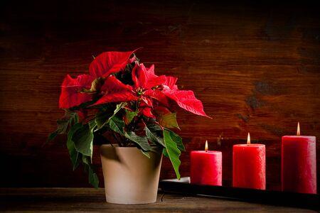 photo of beautiful poinsettia plan on wooden table illuminated by spot photo