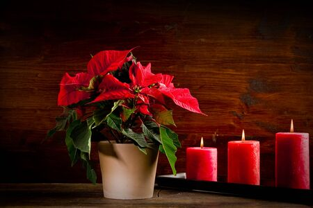 photo of beautiful poinsettia plan on wooden table illuminated by spot Stock Photo - 11500582