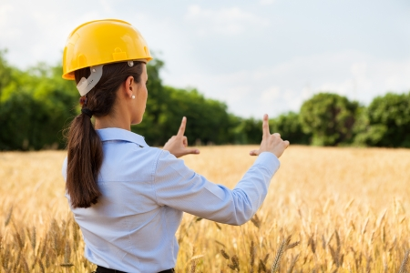woman engineer: Conceptual photo of female architect inside a wheat field