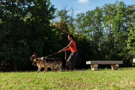 sitter: Photo of dog standing woman with three german shepherds