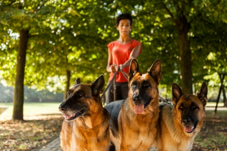 Photo of dog standing woman with three german shepherds photo