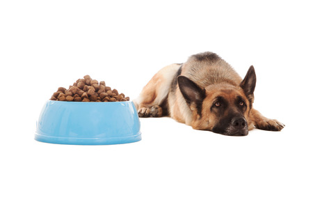 Photo of dog next to his full bowl who doesn't eat