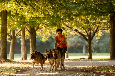 sitter: Photo of dog sitting woman with three german shepherds Stock Photo
