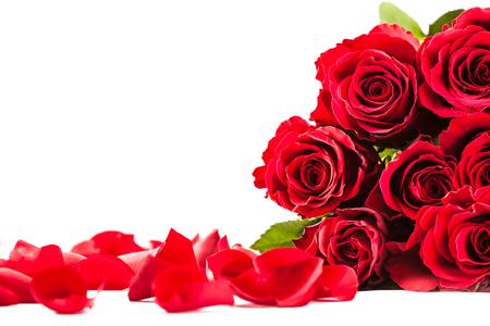 Foto de rosas rojas y pétalos sobre fondo blanco aislado Foto de archivo
