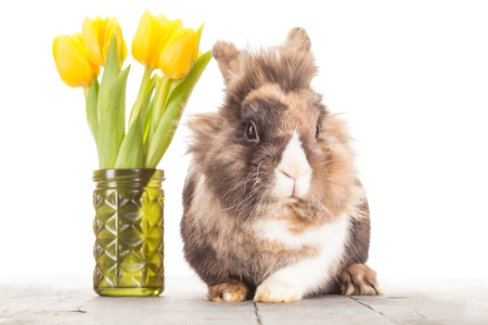 rabit: Photo of funny fluffy rabit over white islolated background