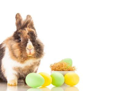 fluffy: Photo of fluffy easter rabbit