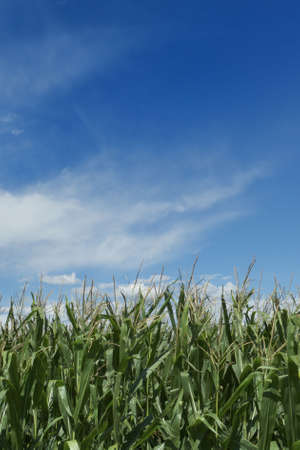 green field whit clouds on sky Stock Photo