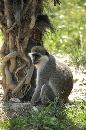 one monkey on nature