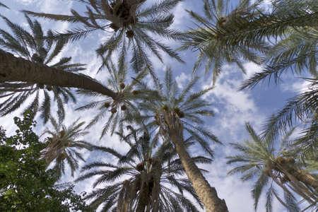 palm on desert oasi africa Stock Photo