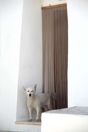 a dog outside from the door on apulia, italy Stock Photo