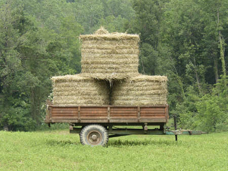 old wagon with hay on prairie Stock Photo