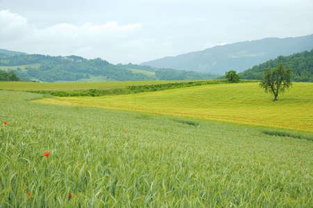 landscape of tuscany italy