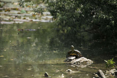 primitivism: a marine turle is heated in sunlight Stock Photo
