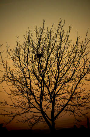 An old abandoned nest at dusk Archivio Fotografico