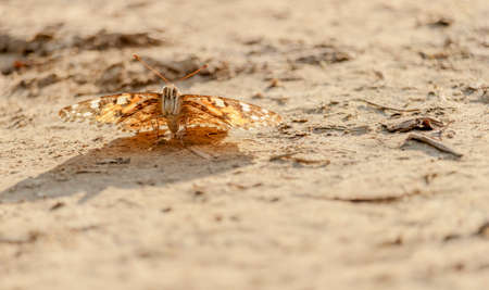 lepidoptera: A butterfly along the path Stock Photo